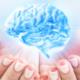 creierului